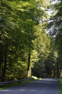 Riesige-Bäume